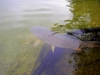 Jezero Rakitna